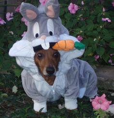 my boy clayton~cindy lou r. Cindy Lou, Baby Car Seats, Dinosaur Stuffed Animal, Halloween Costumes, Dachshunds, Doggies, Puppies, Sausage Dogs, Funny