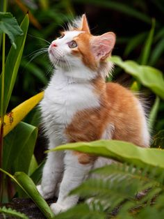Kitty Oh Bell, we missed you so much! Orange Cats, White Cats, Pretty Cats, Beautiful Cats, Kittens Cutest, Cats And Kittens, Mantis Shrimp, Cat Character, Warrior Cats