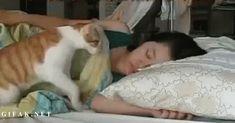 Gatti che ti svegliano
