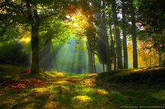 Summer Forest, Emilia Romagna, Italy photo via board