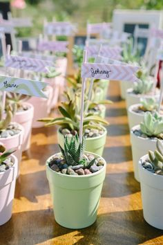 DIY Potted succulent wedding favors! #lifeoftheparty