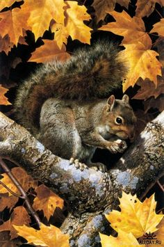 Животный мир от Carl Brenders. realistic squirrel painting during the fall