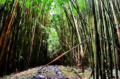 Mystical Bamboo Forest on the Pipiwai Trail in Maui