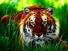 Tiger | Tag: Tiger 3D Wallpapers, Images, Photos, Pictures and Backgrounds for ...