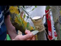 (413) Εμβολιασμός ελιάς πλευρικός - YouTube Outdoor Decor, Youtube, Crafting, Trees, Places, Home Decor, Decoration Home, Room Decor, Tree Structure