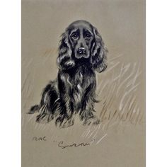 1930's-1940's Lucy Dawson, Spaniel Named Susan Framed Print from the Book, Dogs Rough And Smooth