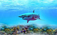 Download wallpapers shark, depth, coral reef, underwater world, predators