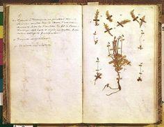 Herbarium by Jean Jacques Rousseau