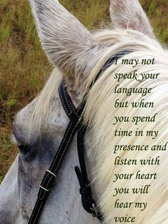 horse quote....Cowgirl at heart!