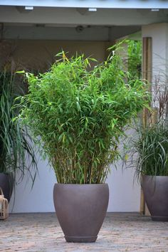 Remodeling and renovation of modern garden design with modern planting Remodeling and renovation of modern garden design with modern planting …. – Garden ideas Source by famtaiber Patio Plants, Outdoor Planters, Garden Planters, Bamboo In Pots, Bamboo Planter, Amazing Gardens, Beautiful Gardens, Modern Garden Design, Garden Ornaments
