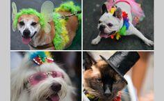 Η   ΕΦΗΜΕΡΙΔΑ   ΤΩΝ    ΣΚΥΛΩΝ: Αποκριάτικο πάρτι για σκύλους στο Ρίο...