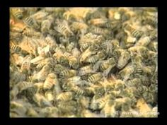 Bee Health eXtension.org-lots of videos