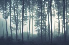 sea-of-trees-forest-plain