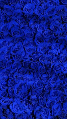 10 Stereotypes About Blue Rose Wallpaper That Aren't Always True Royal Blue Wallpaper, Blue Roses Wallpaper, Blue Wallpapers, Blue Backgrounds, Desktop Wallpapers, Royal Blue Background, Blue Aesthetic Dark, Aesthetic Colors, Flower Aesthetic