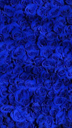 10 Stereotypes About Blue Rose Wallpaper That Aren't Always True Royal Blue Wallpaper, Blue Roses Wallpaper, Blue Wallpaper Iphone, Flower Phone Wallpaper, Blue Wallpapers, Wallpaper Backgrounds, Royal Blue Background, Iphone Wallpapers, Blue Aesthetic Dark