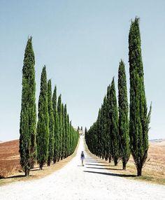 📷 @poetic_mouse 📍Castiglione d'Orcia. Castiglione d'Orcia si trova in provincia di Siena in Toscana. Situato al centro della Val d'Orcia, a poca distanza dalla strada statale Cassia, arroccato su una collina, propaggine della pendice settentrionale del monte Amiata, a lato della valle, comprende anche le frazioni di Rocca d'Orcia, borgo medievale situato su un colle roccioso impervio sopra il quale svetta la Rocca di Tentennano (o Tintinnano), Campiglia d'Orcia, Vivo d'orcia, Ripa d'Orcia…