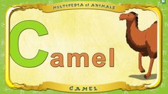 Multipedia of Animals.  Letter C -  Camel