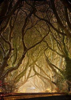 No mundo inteiro, existem árvores extremamente fantásticas que parecem vir de outro planeta; exóticas, perfumadas, fecundas, ou simplesmente lindas. Que tal fazer uma pausa e se recostar sobre a sombra de alguns desses seres vivos excepcionais?...