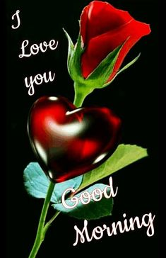 Very Good Morning Images, Good Night Flowers, Good Morning Images Flowers, Good Morning Roses, Good Morning Cards, Good Morning My Love, Good Morning Picture, Good Night Image, Good Morning Greetings