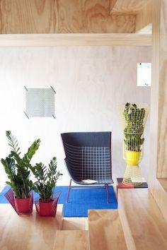 Des plantes en cage #déco #innovation #couleurs #plantes