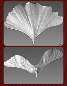 A couple of 3D scans of real materials in nature. these were captured with a custom macro setup. The Ginko leaf was captured without touching it to keep the original form intact. Both scans are water tight 3D and ready for 3D printing.