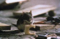 Avoir peur des souris
