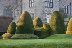 'Welsh hats' in clipped yew, at Chirk Castle, Wrexham. Norah Lindsay, Garden Designer. ©National Trust Images/Andrew Butler