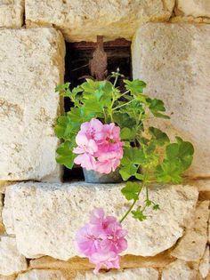 Place Them Everywhere / Pink Geranium