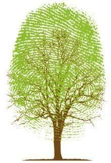 Thumb print as leaf work for tree. This would be great for a fall or thanksgiving card. Use several different fall colors on the thumb to make a fall tree! E Cosmetics, Communication Art, Art Graphique, Autumn Trees, Magazine Art, Go Green, Graphic Design Inspiration, Graphic Art, Illustration Art