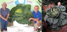 10 of the World's Largest Vegetables and Fruits - Oddee.com (biggest pumpkin, biggest watermelon)