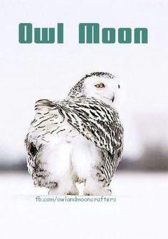 Owl Moon - hahahaha!:)
