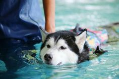Dealing with a Dog That's Afraid of Water? Try These 4 Proven Techniques http://www.dogster.com/dog-training/dealing-with-a-dog-thats-afraid-of-water-try-these-proven-techniques?utm_content=buffer2e664&utm_medium=social&utm_source=pinterest.com&utm_campaign=buffer #dogs