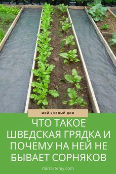 Growing Green Beans, Growing Greens, Landscape Design, Garden Design, Strawberry Planters, Garden Lamps, Garden Structures, Raised Garden Beds, Garden Planning
