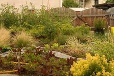 frontyard vegetable gardens   Garden Web The Internet's Largest Home and Garden Community