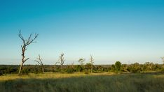 A day to night timelapse with a pan up from a lush green landscape with abstract leadwood tees as night falls against a blue sky, dip to black. Kruger National Park, Green Landscape, Travel And Tourism, Lush Green, Stock Footage, Dip, Trees, Adventure, Abstract