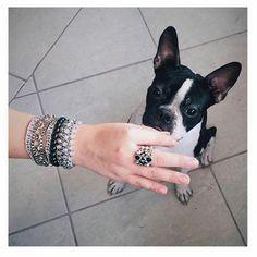 Reflexões antes de dormir: será que o Galileo curtiu o mix de pulseiras e o anel @carolgregori que a Carlinha @notrabalho escolheu, ou será que ele está pensando se este P&B tem parentesco com ele? 😁💟🌟🐕🐼❓🌃🌛 #elausacarolgregori #mix #pulseiras #moda #tendencia #reflexao #preto #branco #p&b #blogger #bracelet #fashion #trend #style #black #white #ootd #inspiration #look #instalook #instablogger #instamood