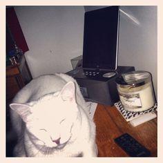 hahaha, cat is feeling the bass // Instagram- Photo by fallon_laree
