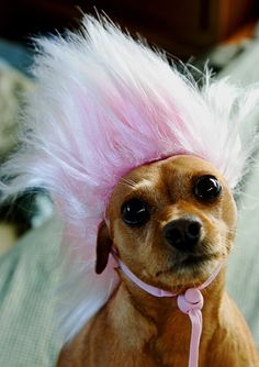 <b>Does it get any better than dogs in wigs?</b>
