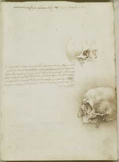 Recto: The cranium. Verso: Notes on topics to be investigated   The Royal Collection