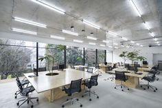 Image 1 of 17 from gallery of Nakagawa Masashichi Shoten Omotesando Shop & Office / Schemata Architects. Photograph by Kenta Hasegawa