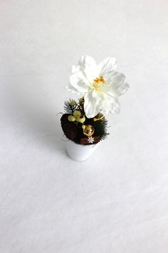 "Amaryllis ""Snow-White"" Winter Wonderland, Snow White, Floral, Flowers, Snow White Pictures, Florals, Florals, Sleeping Beauty, Flower"