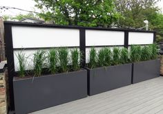 Roof Deck | Screening | Planters | Containers | Grasses | Stand alone (nothing attached to wall) | Urban | Garden | Landscape | Design