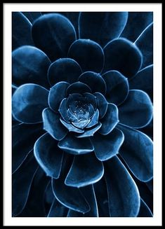 Blue succulent poster in the group posters / sizes and formats / at . - Blue succulent poster in the group posters / sizes and formats / at Desenio AB - Poster Mural, Window Poster, Kunst Poster, Poster Prints, Home Poster, Poster Xxl, New York Poster, Lion Poster, Blue Succulents