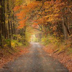 Photo by @jeffmauritzen. Autumn along a quiet rural road in beautiful Loudoun County, Virginia.