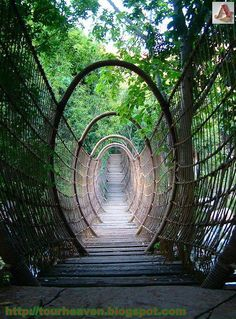 Amazing Places you Should Visit in Your Life - The Spider Bridge in Sun City Resort, South Africa. Description from pinterest.com. I searched for this on bing.com/images
