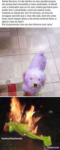 Mds Olha o cachorro