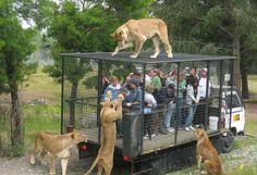 zoologico leon guanajuato - Buscar con Google