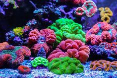 Member Tank Thread: Jourdy's 90 Gallon Mixed Reef This is my tank. Glass Aquarium, Reef Aquarium, Saltwater Fish Tanks, Saltwater Aquarium, Salt Water Fish, Salt And Water, Coral Garden, Marine Fish, Tanked Aquariums