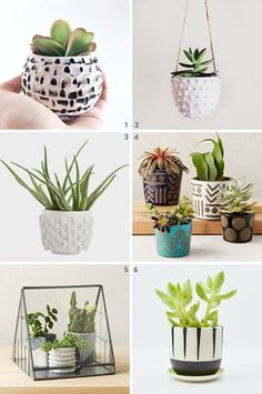 Nyc-Based plant design/delivery service the sill runs one of Cacti And Succulents, Planting Succulents, Potted Plants, Planting Flowers, Indoor Plant Pots, Indoor Planters, Diy Planters, Ceramic Planters, Planter Pots