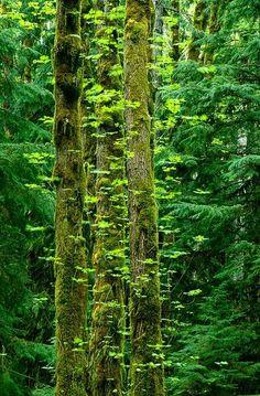 Floresta tropical. Fotografia postada por Eva0707 em Indulgy.